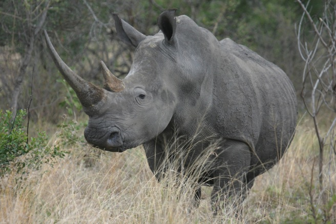 N White Rhino AWF Mourns Pass...