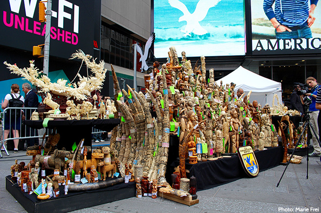 One Ton of Confiscated Ivory Ready to be Crushed in Times Square