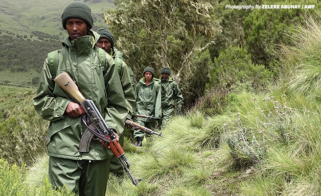 Ethiopian Wildlife Conservation Authority Scouts