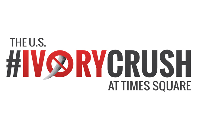 U.S. Government To Crush Ivory in NYC's Times Square