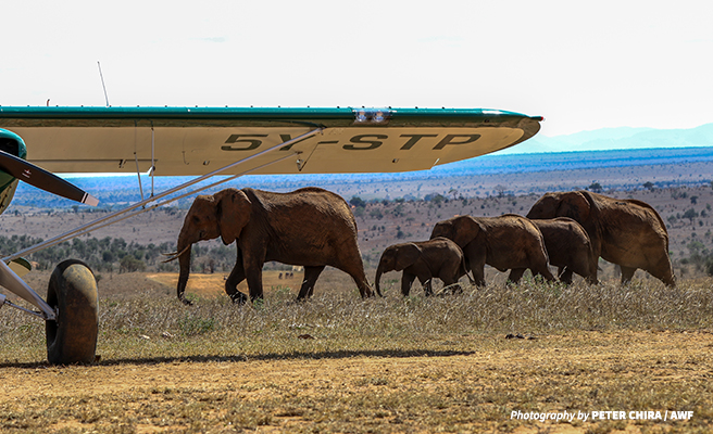 Elephants in front of aircraft used to conduct the censes