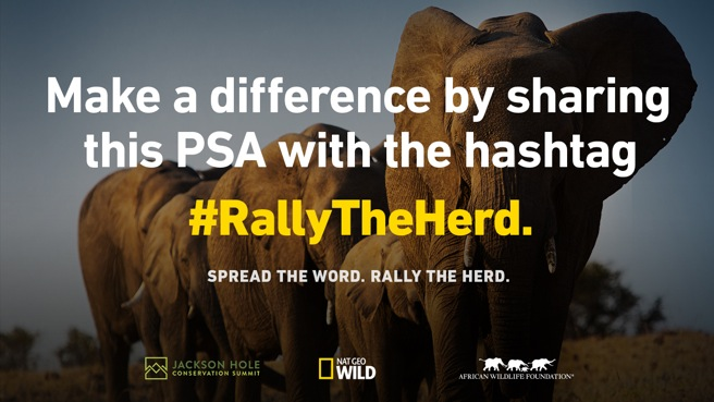Rally the Herd PSA Contest