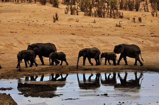 Elephants at a watering hole in Hwange National Park in Zimbabwe. Photo by Perrin Banks