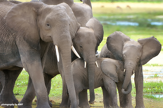 A small group of elephants