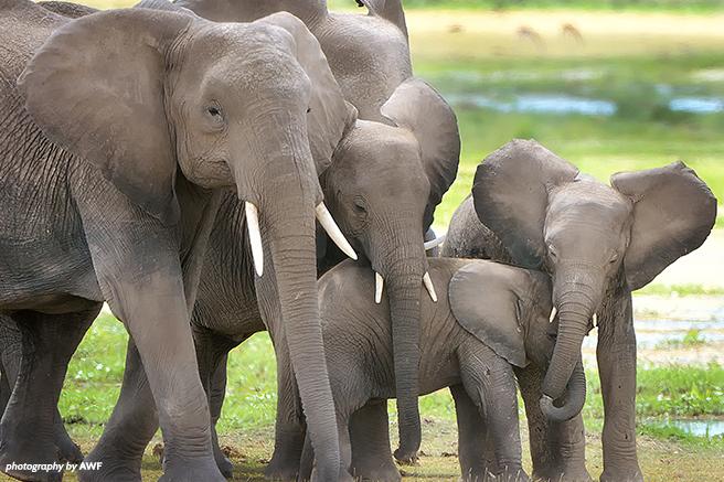 A small group of elephants