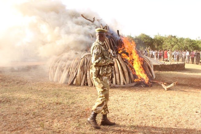 Ivory burned in Kenya