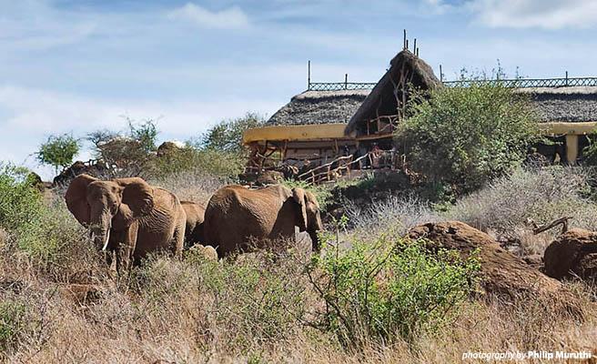 Elephants roam in front of Satao Elerai Lodge