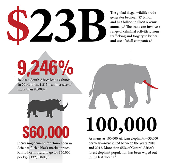 A snapshot of AWF's wildlife crime infographic.