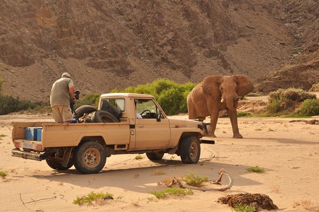 Cameraman on safari with elephant