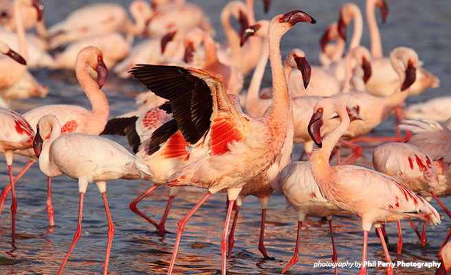 AWF helped restore a river that flows into Lake Nakuru