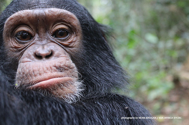 Cameroon's Vanishing Great Apes