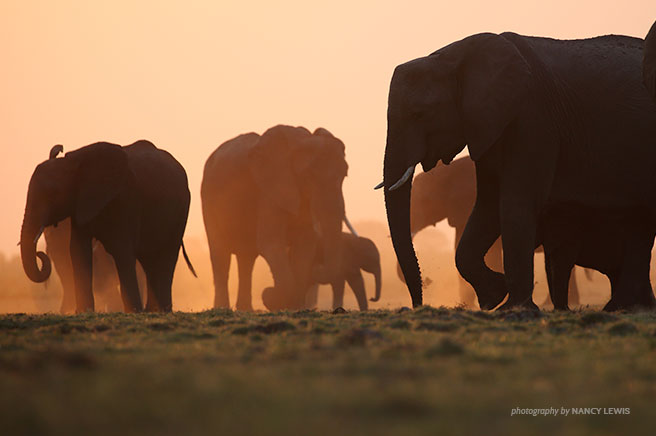Wildlife in a Modern Africa