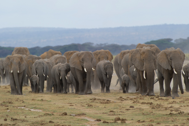 A herd of elephants. Photo by Max Chiswick