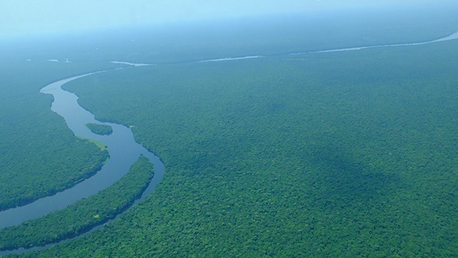 Congo Basin forest