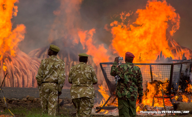 KWS rangers at Kenya's 2016 ivory burn