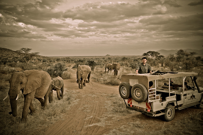 Yao Ming views elephants in Kenya.