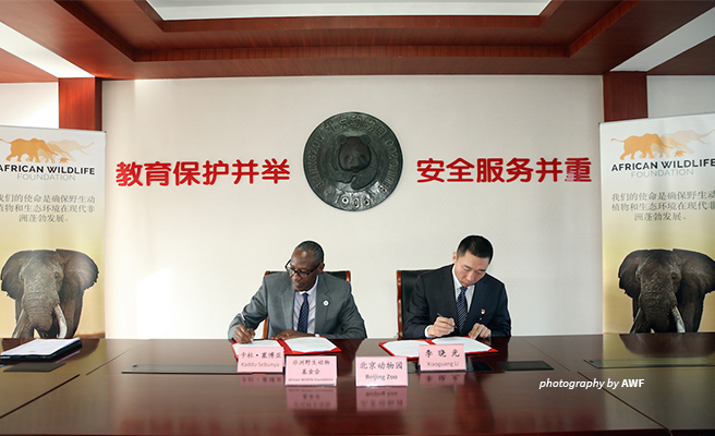 AWF and the Beijing Zoo signed a memorandum of understanding establishing a sustainable conservation partnership