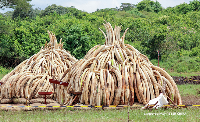 Hong Kong lawmakers vote to ban trade in ivory by the end of 2021.