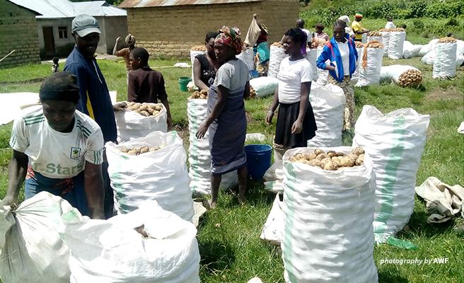 Image of potato farmers in southern Tanzania.