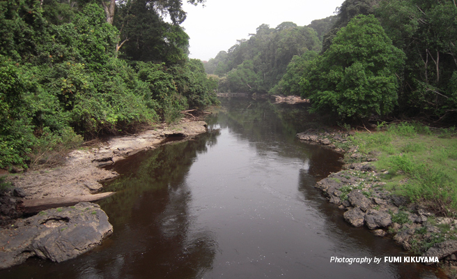 Photo of river flowing through Campo Ma'an National Park in Cameroon