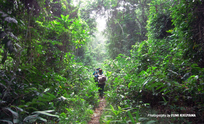 Rangers walking through dense forest in Campo Ma'an National Park in Cameroon