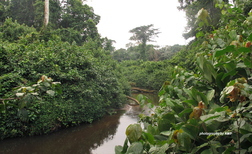 Photo of river passing through Dja Faunal Reserve in southern Cameroon