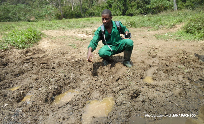 Photo of a ranger in the Dja Faunal Reserve recording a set of elephant footprints