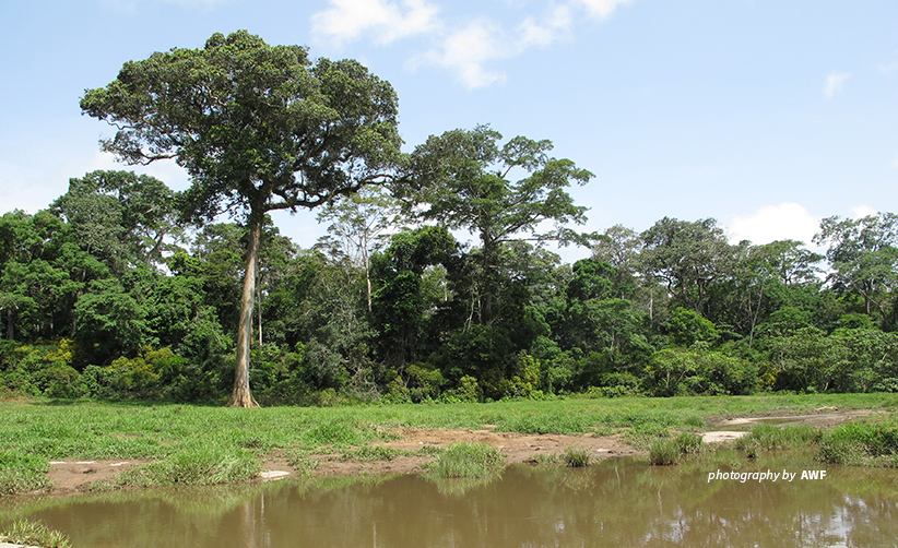 Photo of trees and shrubs in Dja Biosphere Reserve in Cameroon