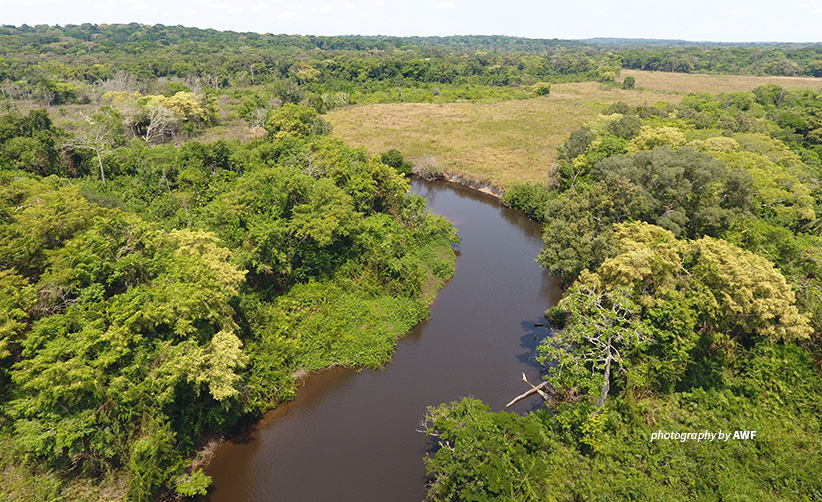 Aerial photo of river flowing through tropical forest in wildlife-rich landscape in northern Democratic Republic of Congo
