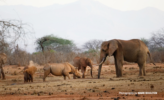 Photo of elephants and eastern black rhino grazing in dry savanna in Tsavo