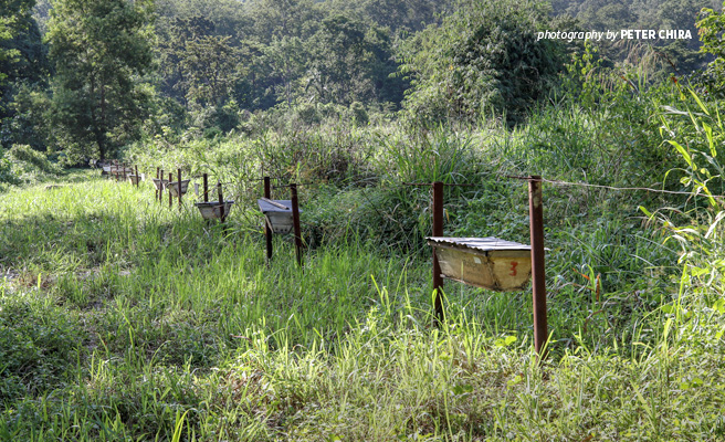 Photo of beehive fence installed between protected forest to deter elephants from crossing into farmland