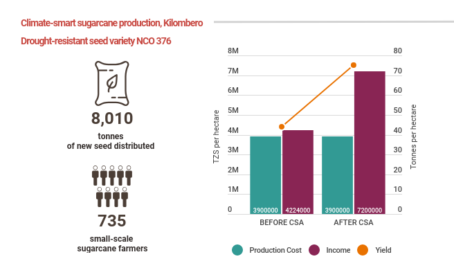 Infographic showing the incease in sugarcane yield and revenue after sugarcane farmers used climate-smart seeds