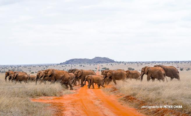 Photo of a herd of elephants crossing a road in LUMO Community Wildlife Sanctuary
