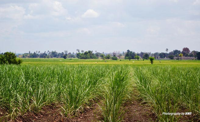 Photo of crop fields in Kilombero, Tanzania