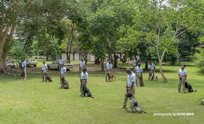 Photo of newly trained Uganda Wildlife Authority rangers and detection canines
