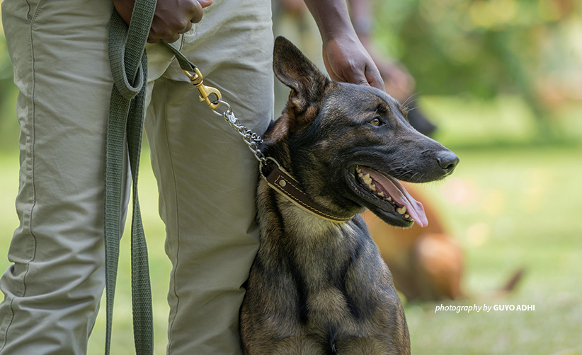 Close-up photo of trained wildlife contraband detection canine and handler at AWF-supported training facility in Tanzania