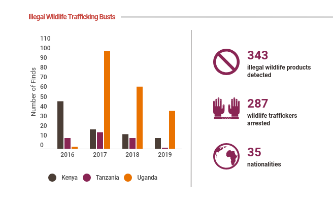 Infographic showing the decline in illegal wildlife trafficking busts by canine units at trafficking hotspots