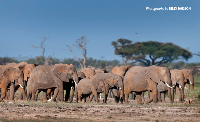 Photo of herd of elephants in Kilimanjaro landscape