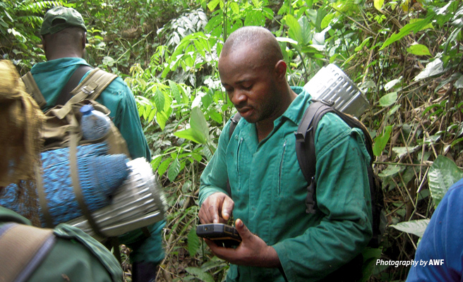 Close-up photo of Campo Ma'an National Park ranger on patrol using CyberTracker and SMART tools