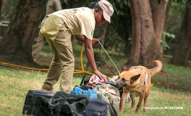 Photo of AWF-trained canine detection unit demonstrating luggage check