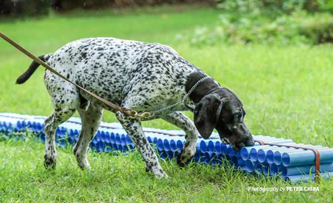 Photo of AWF-trained sniffer dog demonstrating how illegal wildlife products are found