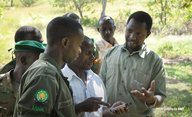 Photo of AWF staff training rangers Uganda Wildlife Authority on CyberTracker/SMART monitoring