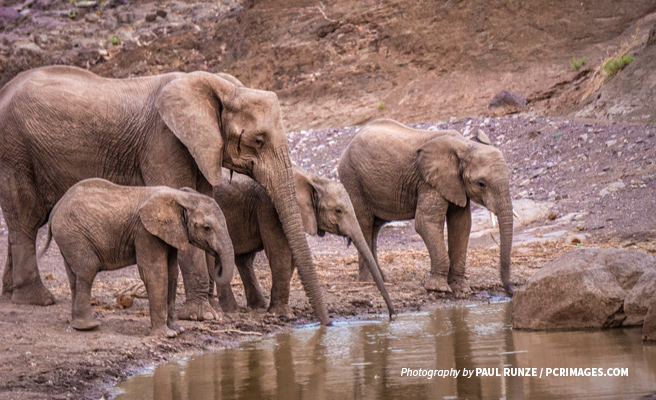 Photo of elephant family drinking water a small water hole in the savanna
