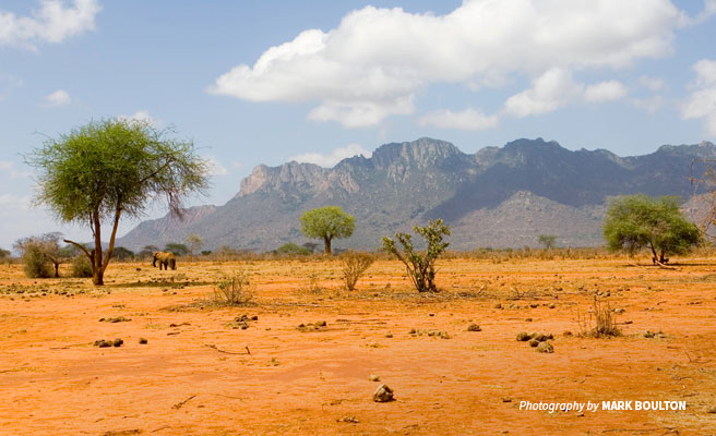 Lone elephant on a hot day in Tsavo during a period of low rainfall