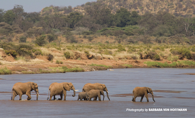 Photo of a small herd of elephants crossing a river in the dry Samburu landscape