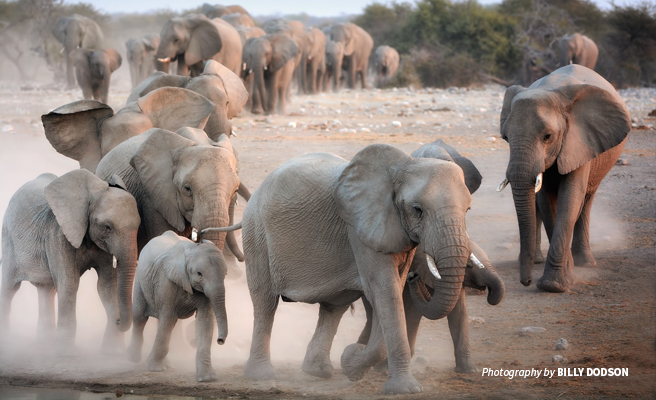 Photo of herd of African elephants in dusty savannah landscape
