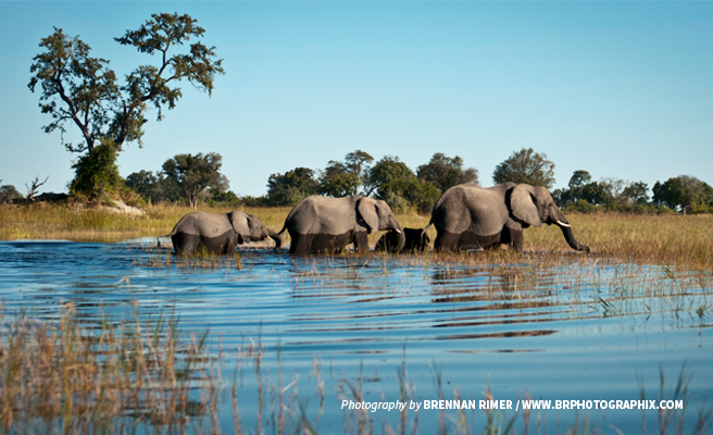 Photo of small herd of elephants on Zambezi River at Kazungula