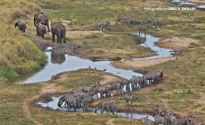 Aerial photo of herd of elephants and zebras at a waterhole in African landscape