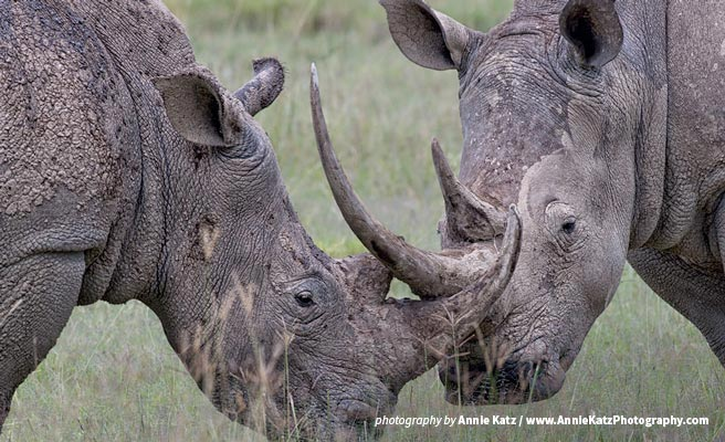 Domestic rhino horn trade in South Africa