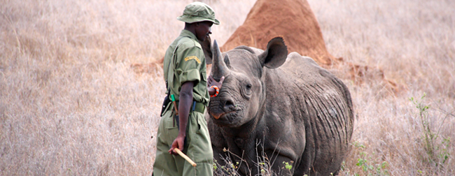 Photo of community ranger protection African rhino in savanna landscape